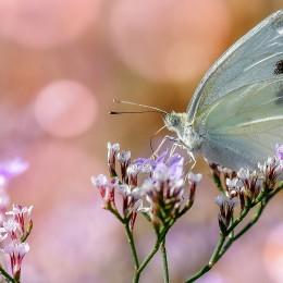 proc mám na webu motýla